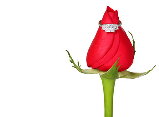Engagement Ring and Red Rose isolated on white. Proposal