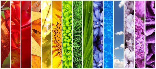 Collage of beautiful flowers, grass, sky and water