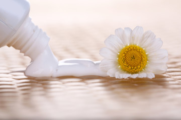 Toothpaste squeezed from tube, chamomile flower, close-up,