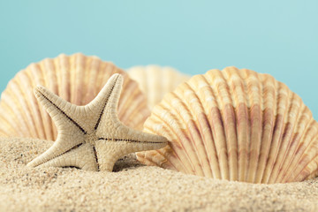 Starfish and seashell on beach