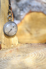 Old pocket watch and rings of a tree trunk