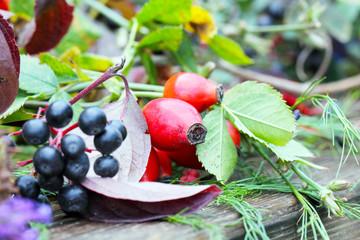 Hagebutten, Herbstfrüchte
