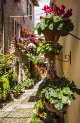Spello: vicolo con vasi in fiore