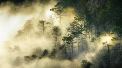 Секреты старого леса
