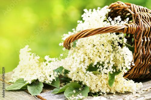 Leinwanddruck Bild Blüten des Schwarzen Holunders im Körbchen, Textraum, Copyspace
