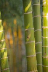 detail of bamboo tree