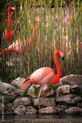 Foto op Aluminium Flamingo flamingo in Lisbon Zoo