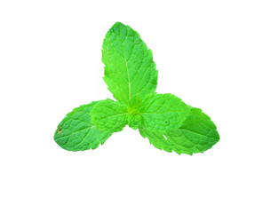 Fresh mint isolated on a white background