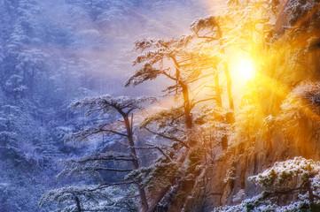 В сердце зимнего леса