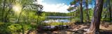 Fototapety Leśna panorama nad brzegiem jeziora