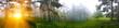 Постер, плакат: Закат в сосновом лесу