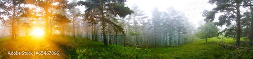 Закат в сосновом лесу - 65467866