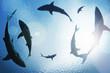 Leinwandbild Motiv School of sharks circling from above