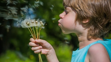 Cute Boy blowing dandelion seeds in spring.
