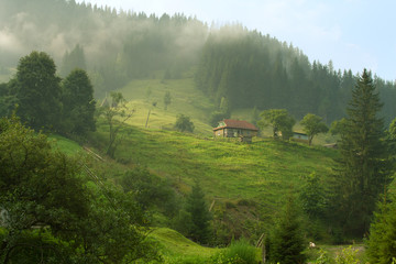beautiful summer morning in Carpathian Mountains , Ukraine.