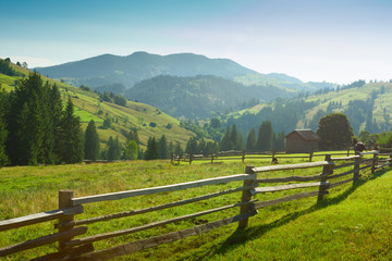 Beautiful sunny   morning in  Carpathian Mountains , Ukraine.