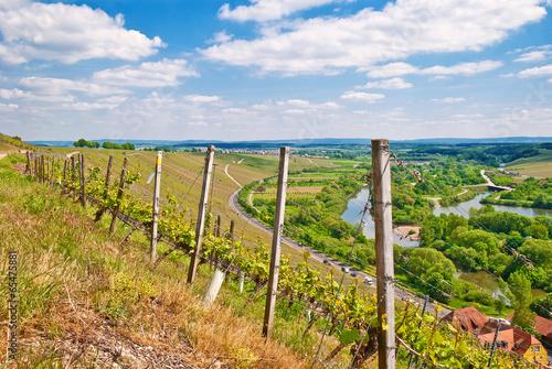 Leinwanddruck Bild Reben im Weinland Franken an der Volkacher Meinschleife