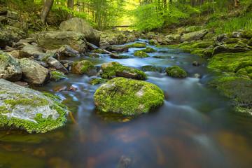 Versteckte brücke über einem Fluss im wald