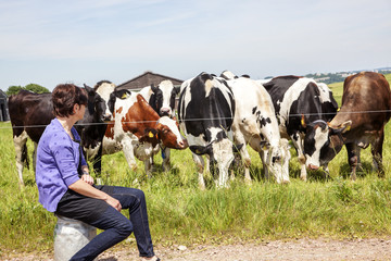 Woman sitting on milk jug in front of the cows