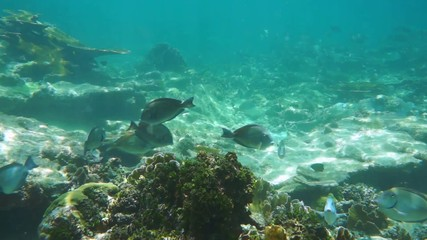 Underwater seabed with school of tropical fish