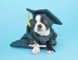 Mad Graduation Puppy