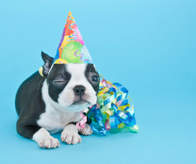 Winking Birthday Puppy.