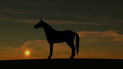 Horse Rise in Sunset