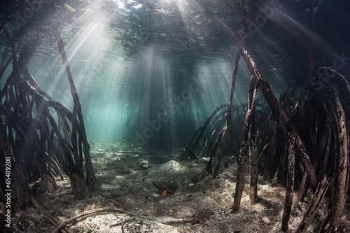 Leinwanddruck Bild Sunlight in Mangrove Forest