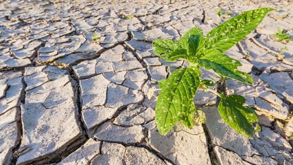 dryness: arid land