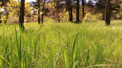 Bright green grass. Animal view.  Slow motion
