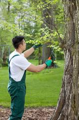 Gardener cropping tree