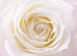 Obrazy na płótnie, fototapety, zdjęcia, fotoobrazy drukowane : バラ、薔薇