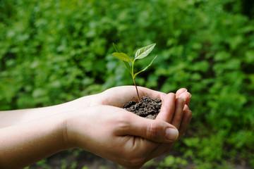 farmer holding green plant