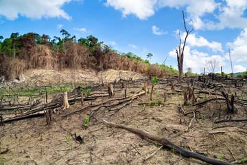 Deforestation in El Nido, Palawan - Philippines