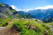 Löwenzahn und Alpen
