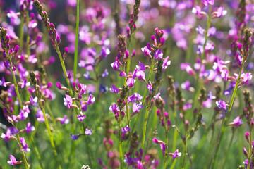 Beautiful small wildflowers close up