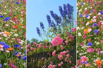 Triple - bunte Sommerblumen