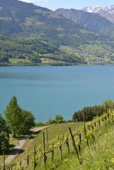 vigne...suisse alpine