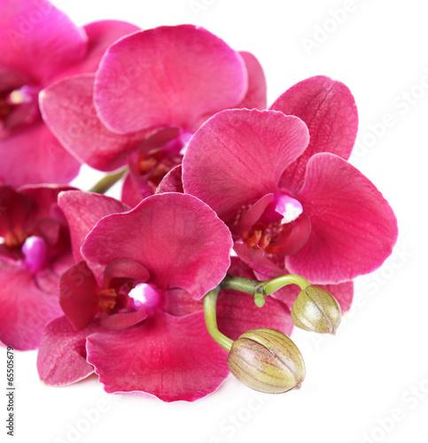fototapeten orchideen. Black Bedroom Furniture Sets. Home Design Ideas