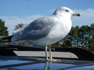 Close-up of a seagull