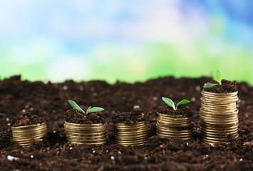 Business concept: golden coins in soil with young plants