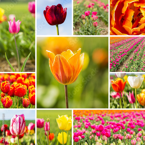 canvas print picture Tulpen holland collage