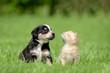Katze Hund Freundschaft