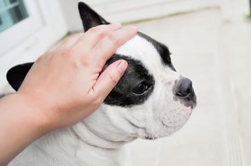 grope a dog