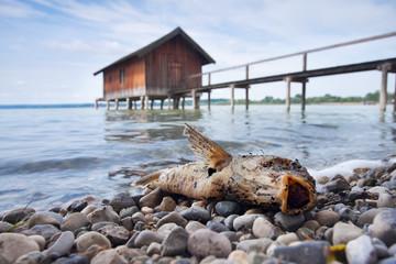 Fisch am Bootshaus