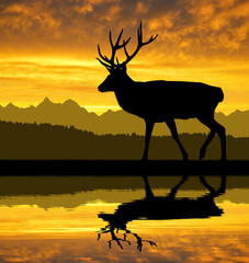 Deer silhouettes in the sunset
