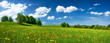 Field with dandelions and blue sky - 65518801