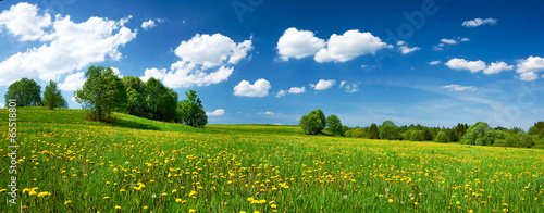 Staande foto Platteland Field with dandelions and blue sky