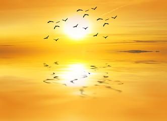 aves buscando el calor del sol