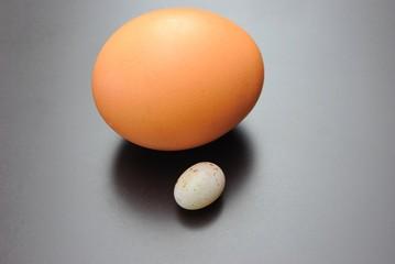 Uovo di gallina e uovo di passero
